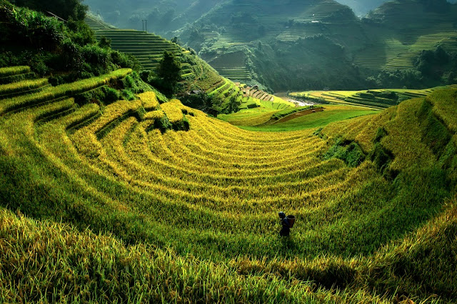 Terraces Fields - brand of Northern Vietnam. 2