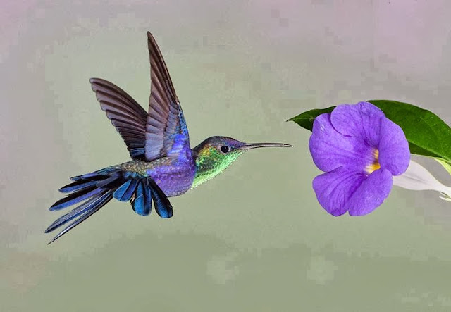 "Hummingbird: ""Go my flying machine, to planet on that purple flower planet!"""