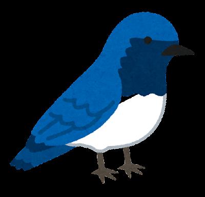 オオルリのイラスト(鳥)