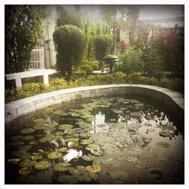 Sadhana Mandir Frog Pond