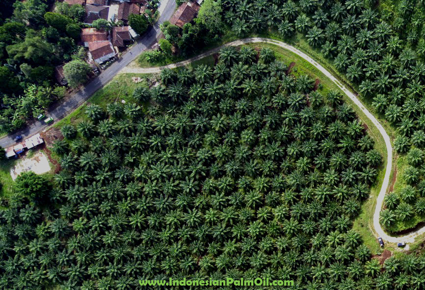 IPOP Indonesia palm oil pledge