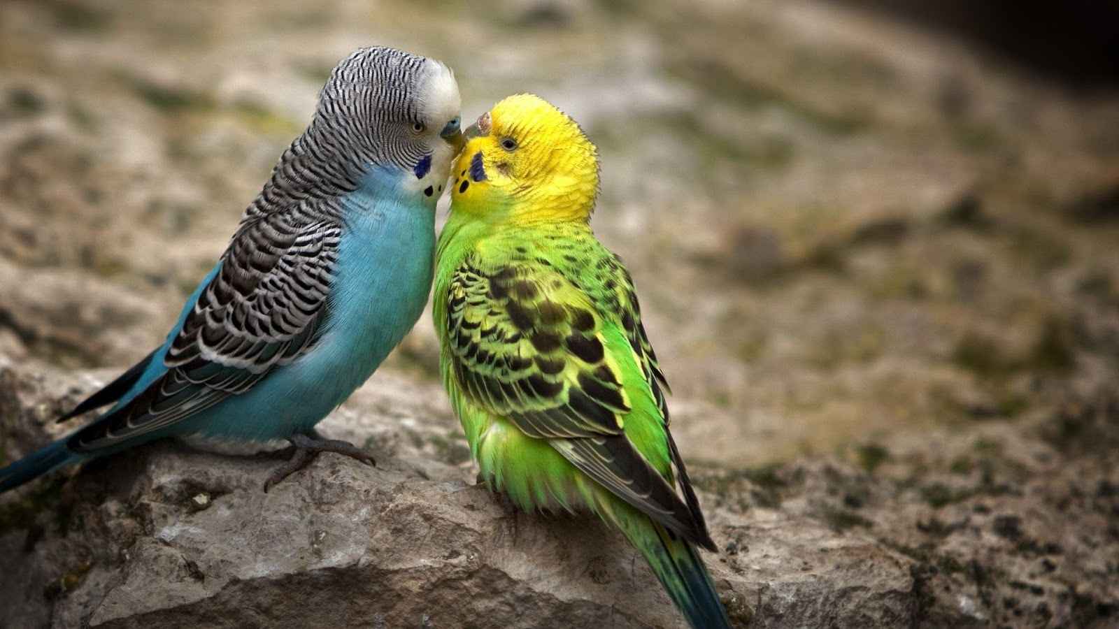 Collection Of Best Animal Wallpapers: HD Animals Wallpapers