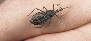 Μεταλλαγμένος φονικός ιός μεταδίδεται από ένα απλό τσίμπημα!