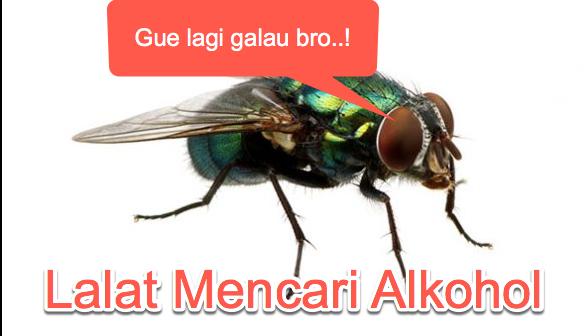 fakta-sains-lalat
