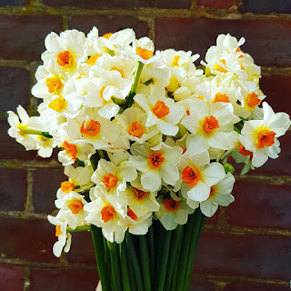 Narcissus Bunch from Blue Bowl