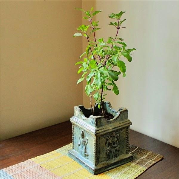 Vastu Shastra Indoor Plants For House