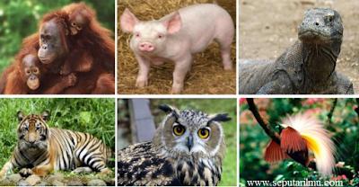 Pengertian Fauna, dan Persebaran Fauna di Dunia