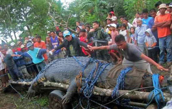 People measuring the size of Lolong, the giant buwaya.