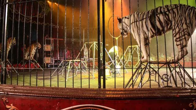 Reaksi Hewan Sirkus Saat Dibebaskan ke Habitatnya