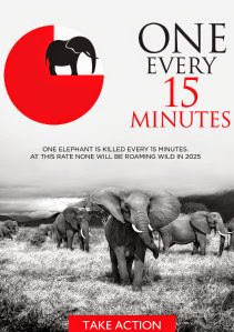 ONE ELEPHANT IS KILLED EVERY 15 MINUTES ON AVERAGE