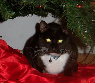 A tuxedo cat with glowing eyes sitting on a red tree-skirt, under an artificial Yule tree.