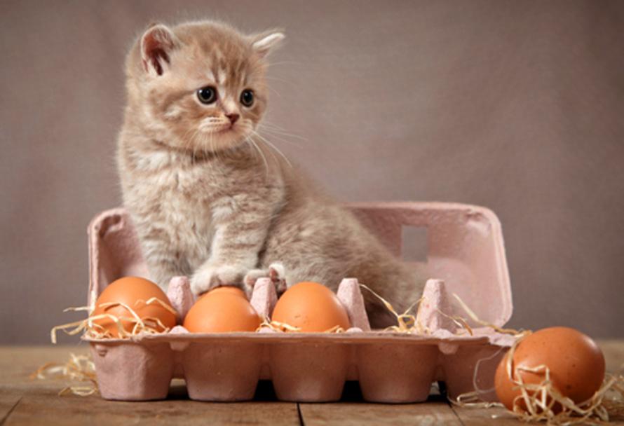 Human food for kitten