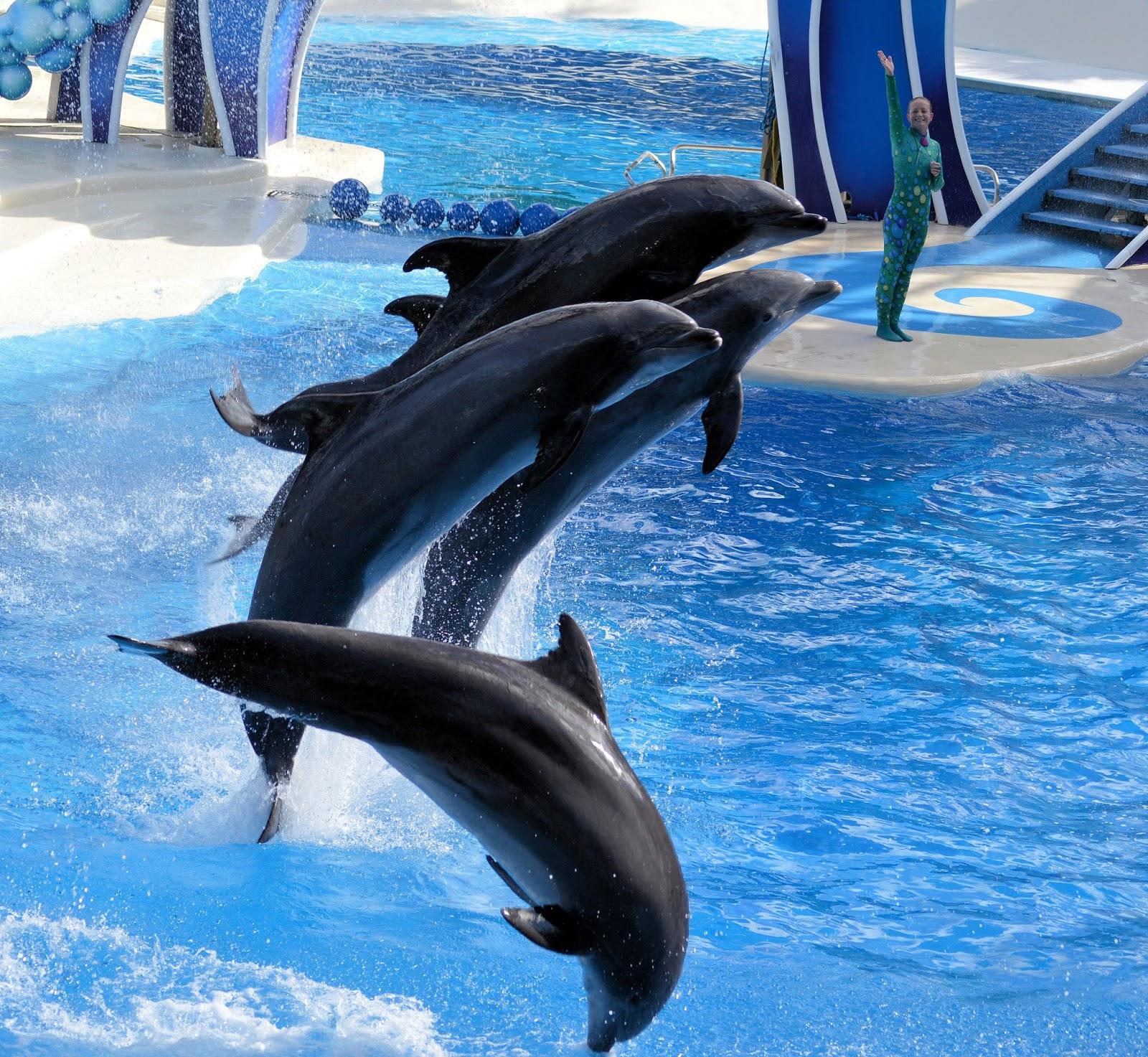 dolphin show 5