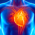 Organ Peredaran Darah pada Manusia