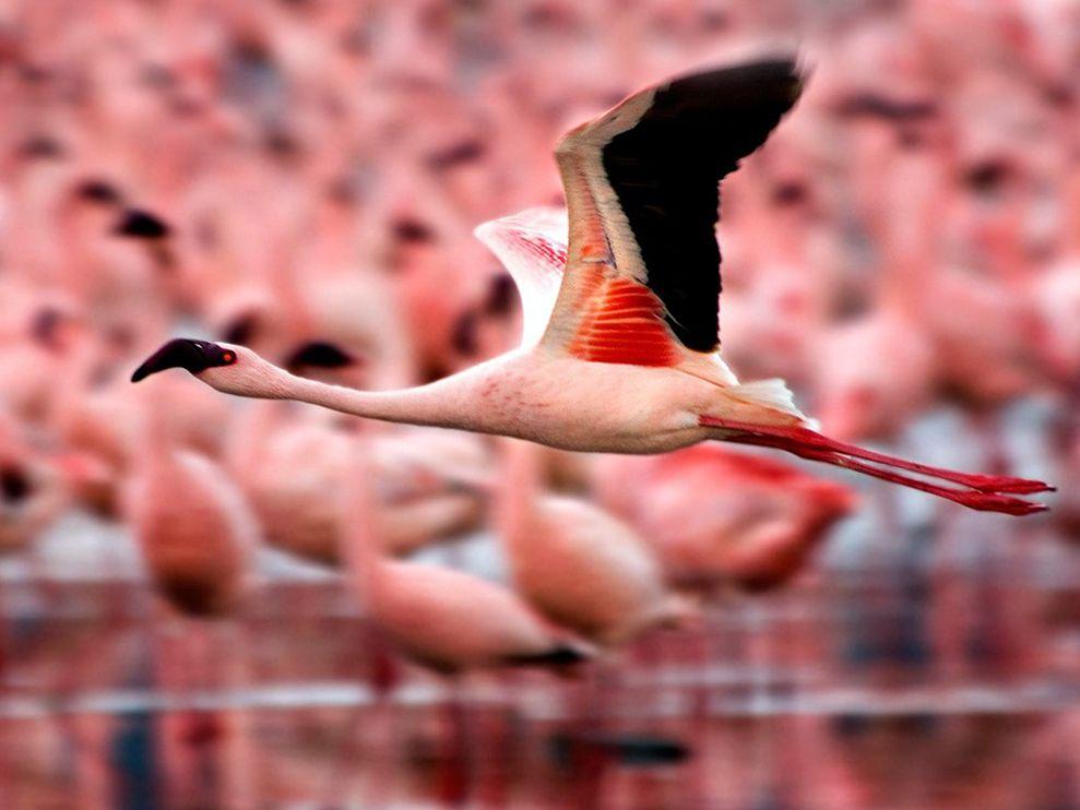 Πώς να κάνει το πουλί μακρύ και μεγάλοτέχνη του πίπα blog