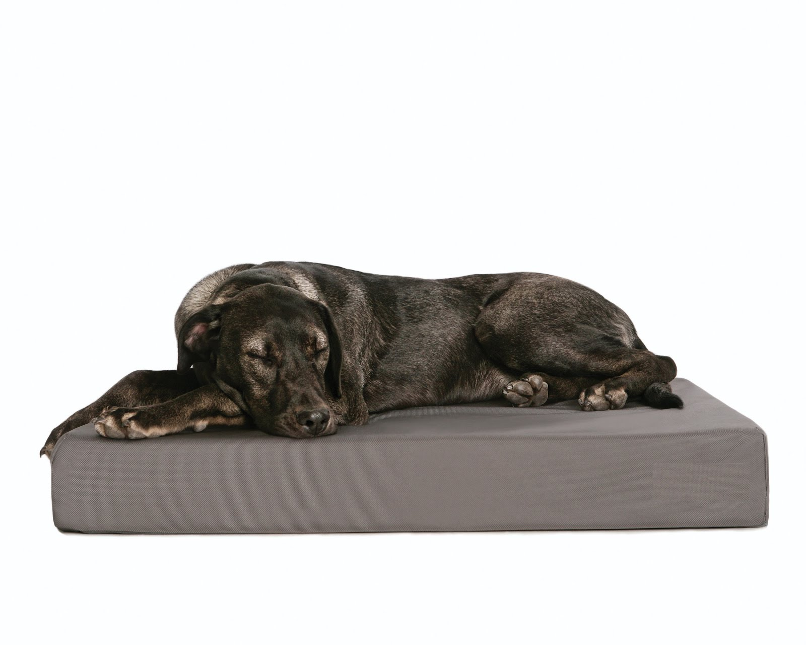 Dog shop indestructible dog beds for chew resistant dogs for Sound proof dog bed