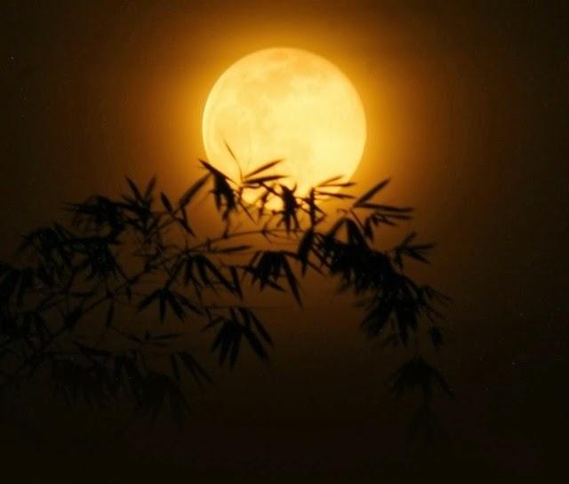 Khúc trăng khuya