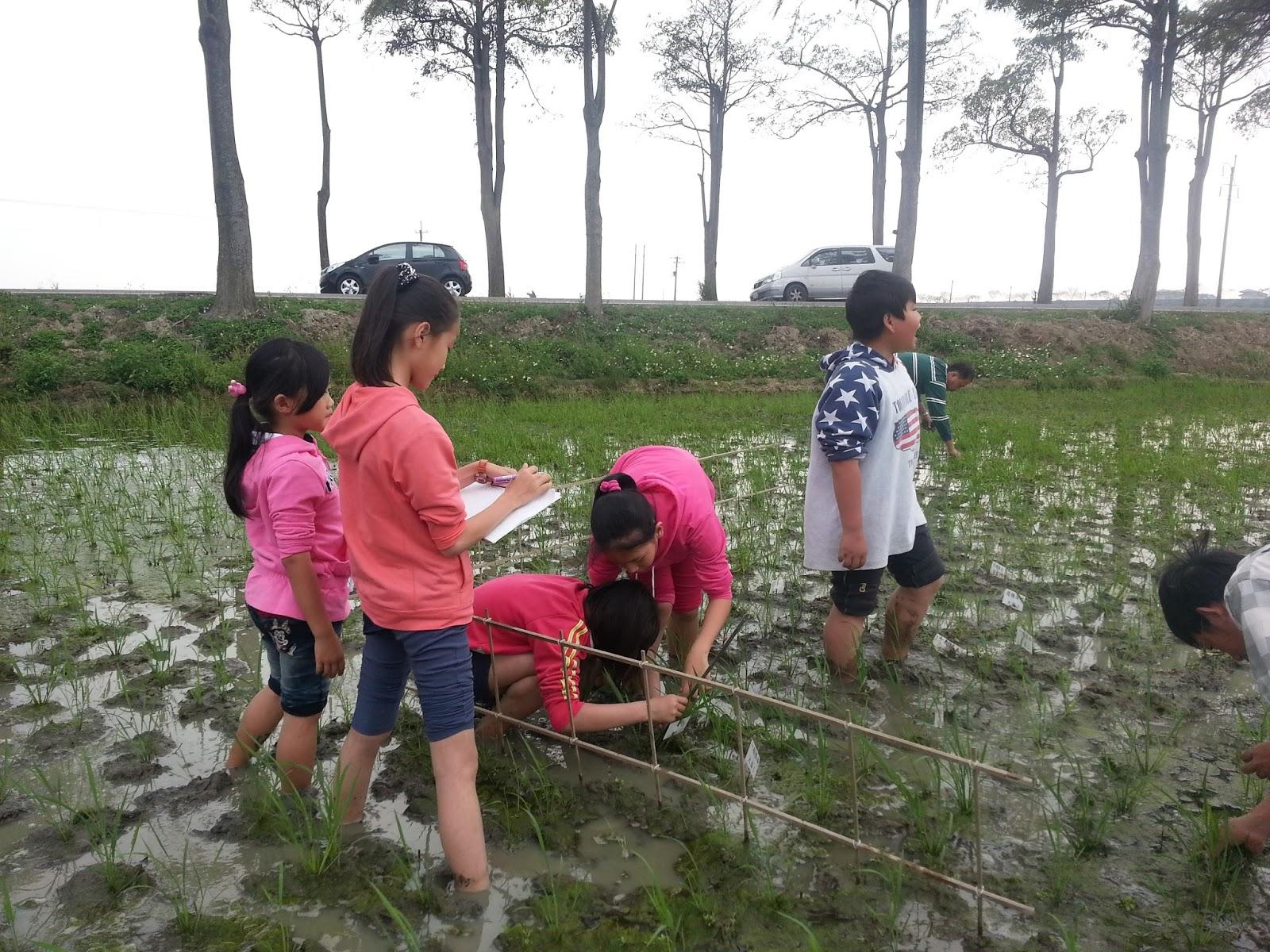 【新營週三見】0504(三) KKF自然農法與臺灣稻米的問題(李榮宗) | 荒野保護協會