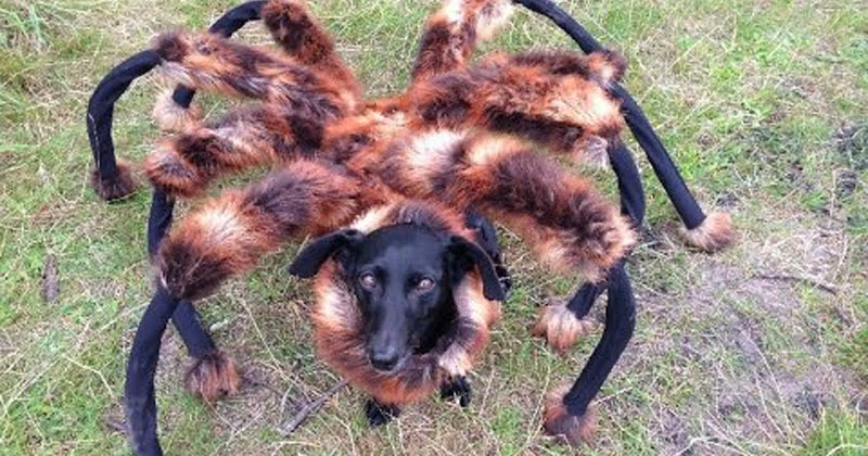 Scary Dog Costumes | Fun Animals Wiki, Videos, Pictures ...