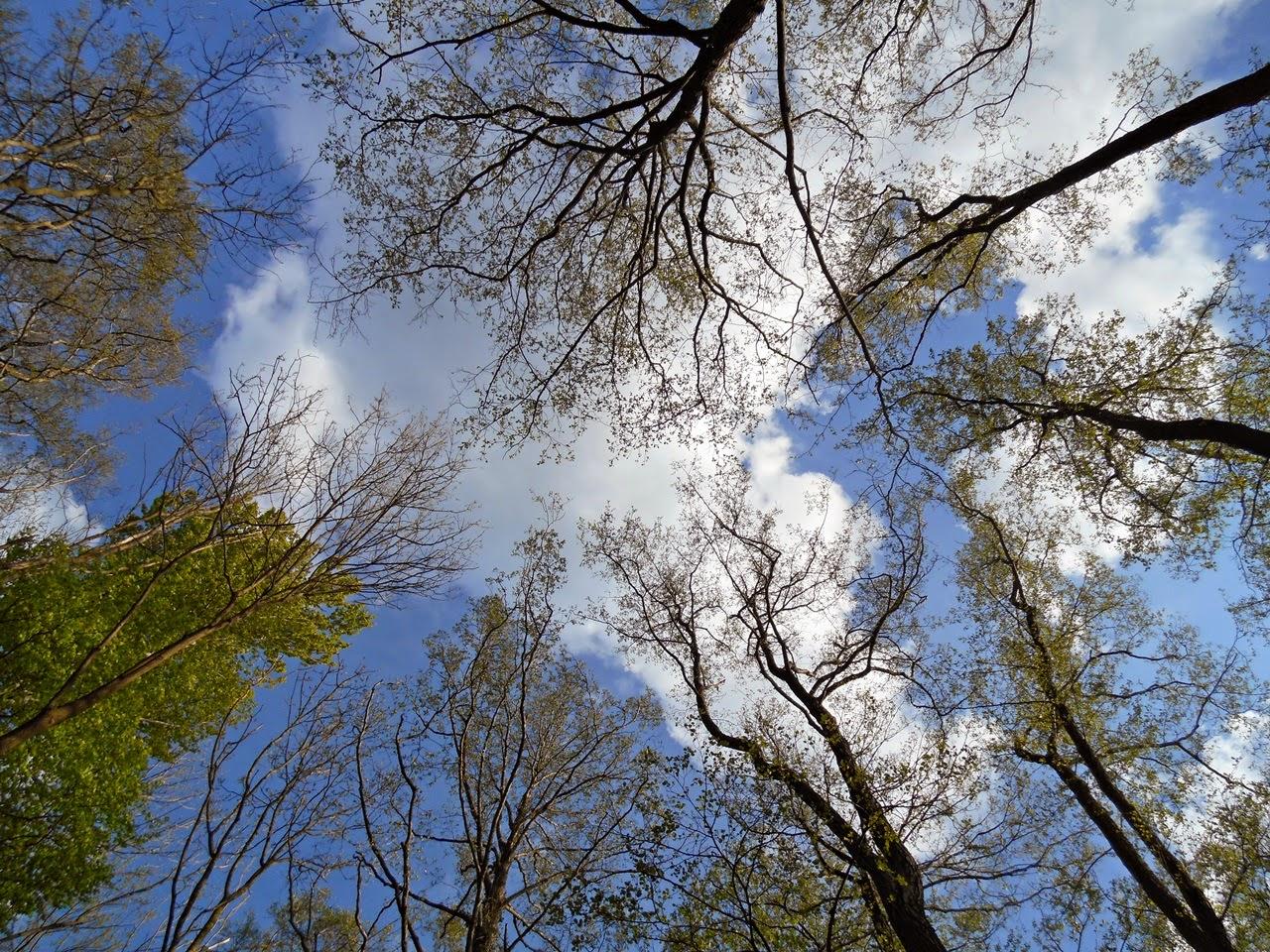 drzewa, chmury, park, las, dzika przyroda