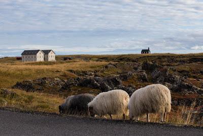 Les 5 meilleurs hôtels de l'ouest de l'Islande