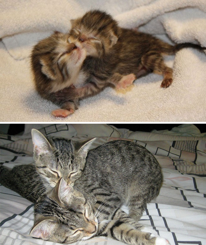 50 Heart-Warming Photos of Animals Growing Up Together - 2 Years Later And They Still Cuddle Together