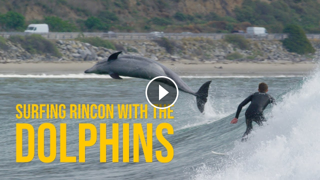 Surfing Rincon With The Dolphins