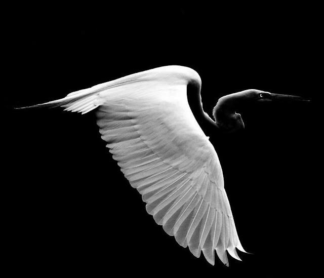 Steve-Irwin-hijo-robert-irwin-fotografias-naturaleza