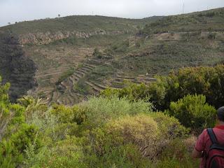 Ascenso a Parque Garajonay, La Gomera