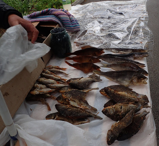 Ryby w poleskim sanatorium (2017)