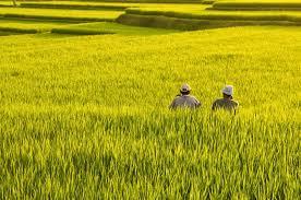 Keadaan Pertanian Desa Tangkawang Kecamatan Haur Gading