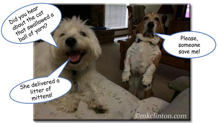 Westie telling cat joke to unimpressed Basset Hound