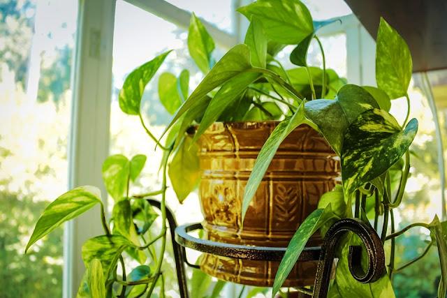 05. Gunakan pot tanaman yang sesuai