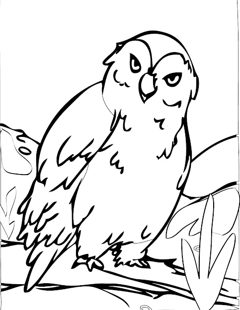 Cartoon Owl Coloring Pages Clipart Best Cute Owl Coloring Pages