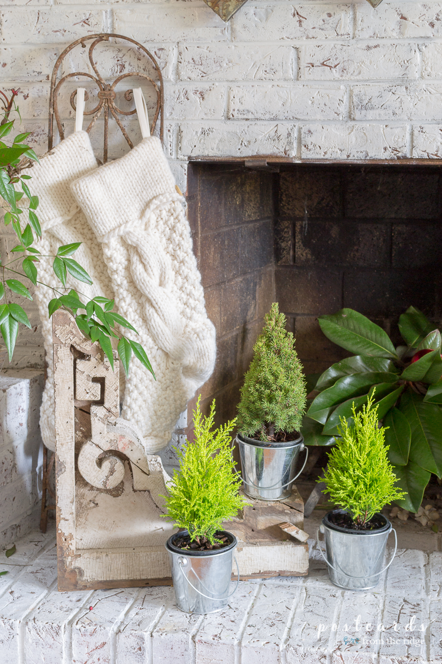 miniature lemon cypress and dwarf Alberta spruce trees on hearth
