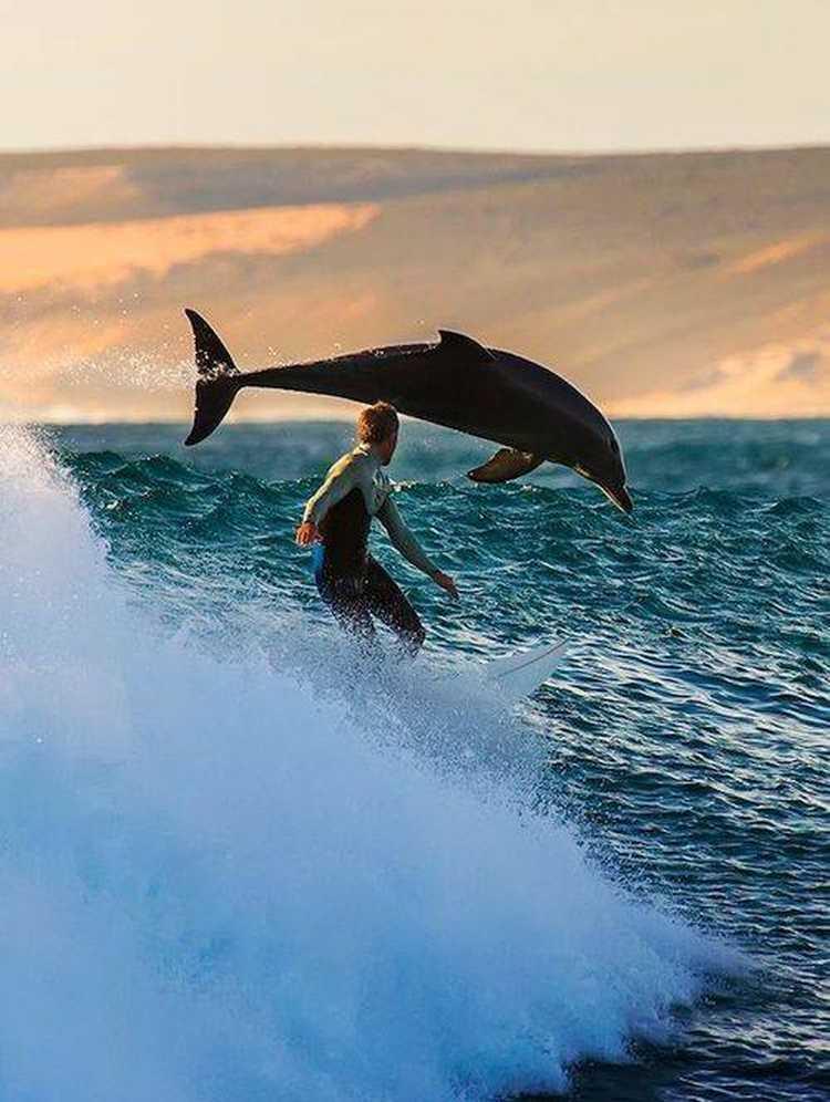 delfin8