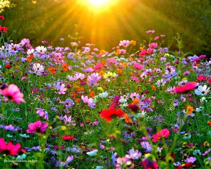 linda estação: primavera!