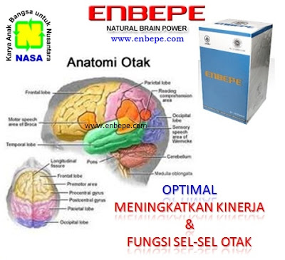 Natural Brain Power (ENBEPE)