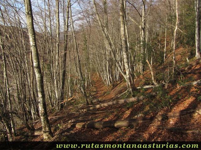 Bosque bajando al Pontón