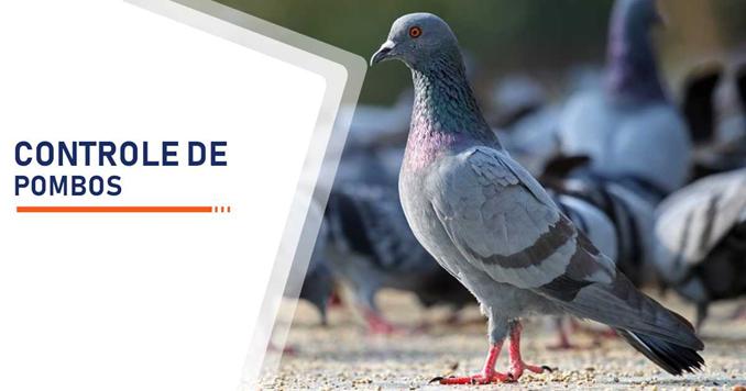Controle contra a proliferação de pombos na zona norte leste sul oeste