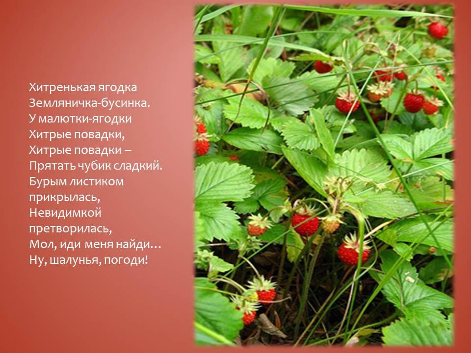 стихи земляничка ягодка карден всегда стремился