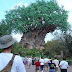 Memory 181 - A Day at Disney's Animal Kingdom: Part 1, The Entrance