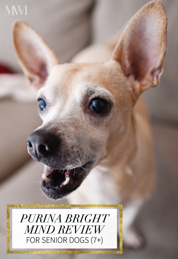 Purina Pro Plan Bright Mind Review for Senior Dogs (7+)