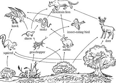 ekosistem pdf pengertian ekosistem ekosistem darat ekosistem laut kumpulan makalah ekosistem laut makalah ekosistem akuatik