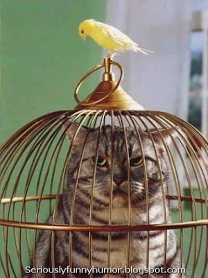 Cat in a cage - Canary troll