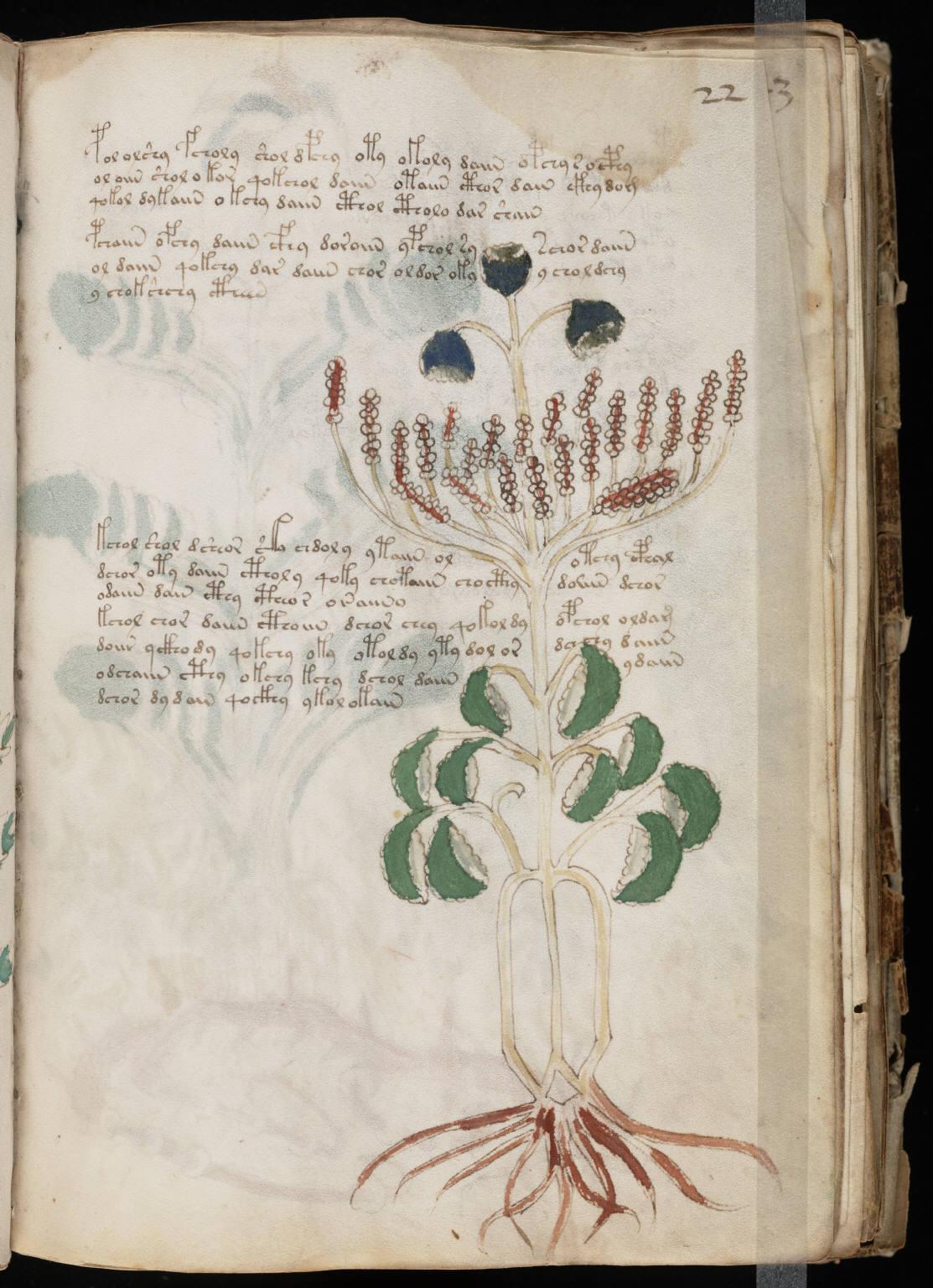 manuscrito043