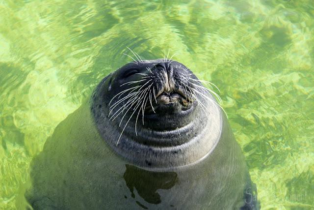 Seehund Ecomare auf Texel