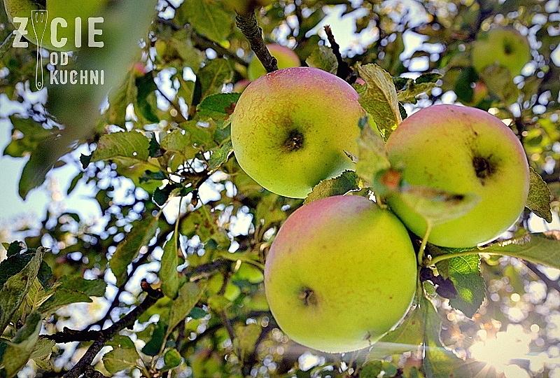 jblka na jabloni
