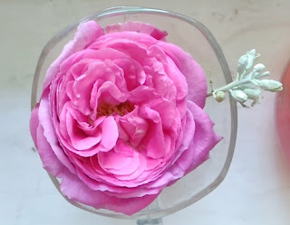 pink rose in glass photo