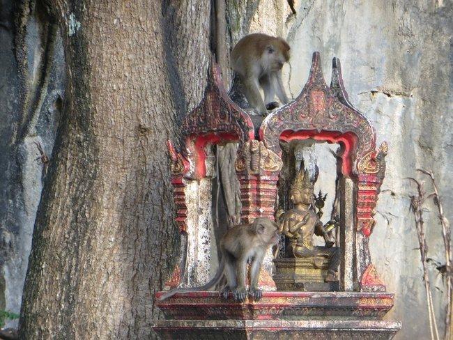 Мартышки таиланд